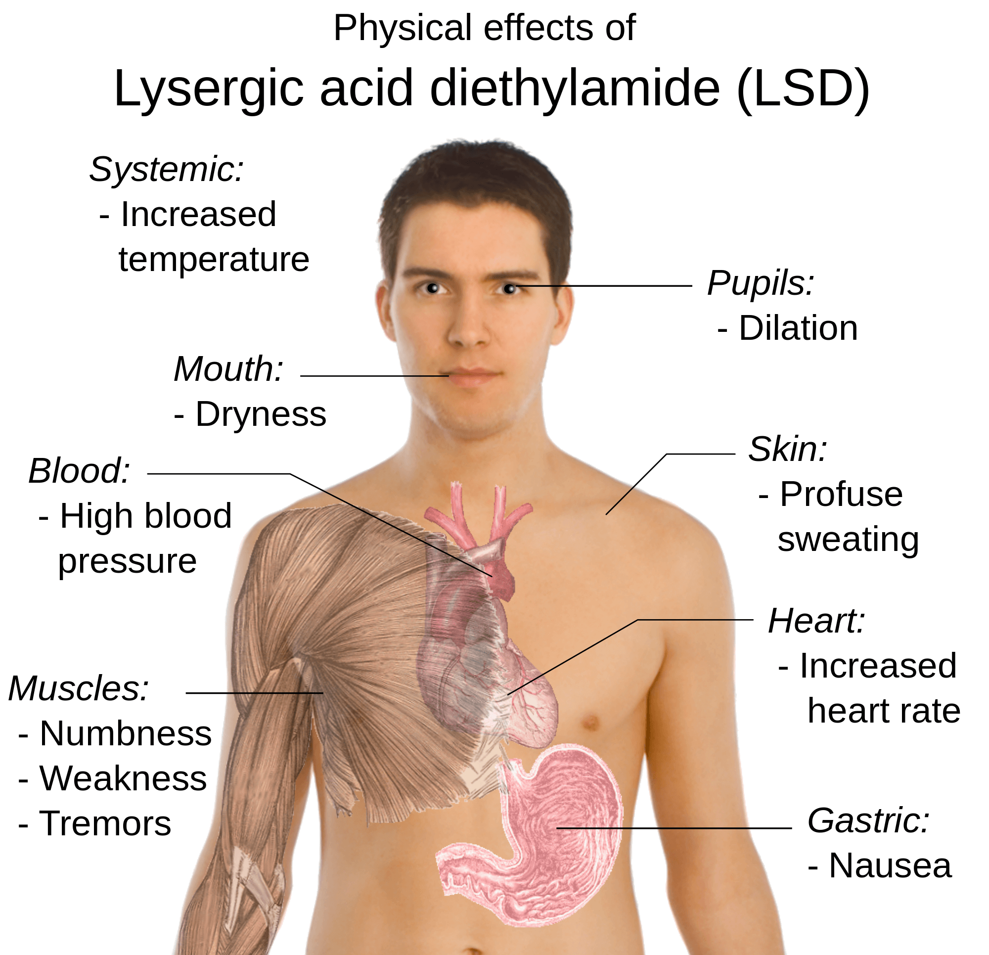 how long does lsd stay in your system human body - Harptimes.com